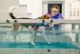 Tierphysiotraining & Hundesalon