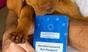 Haustierversicherung für alle Fälle und Felle