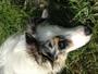Gassi-Geh-Service Zeit für Hunde